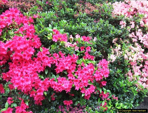 2015-05-22 Compton Acres Gardens, Poole, Dorset.  (49)