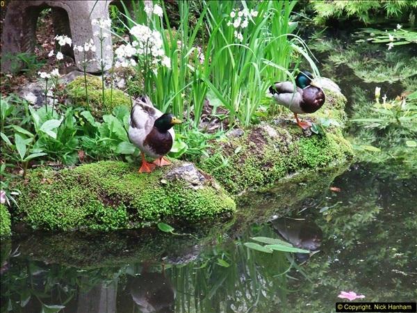 2015-05-22 Compton Acres Gardens, Poole, Dorset.  (57)