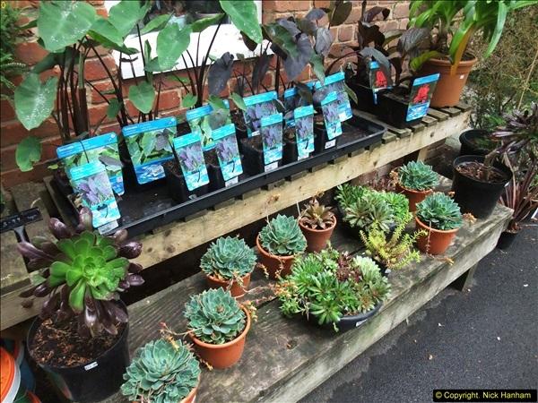 2015-05-22 Compton Acres Gardens, Poole, Dorset.  (74)