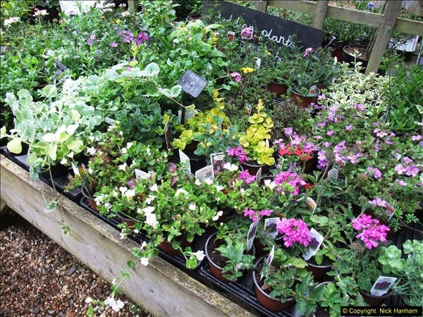 2015-05-22 Compton Acres Gardens, Poole, Dorset.  (77)