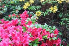 2015-05-22 Compton Acres Gardens, Poole, Dorset.  (21)