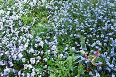 2015-05-22 Compton Acres Gardens, Poole, Dorset.  (34)