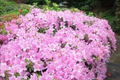 2015-05-22 Compton Acres Gardens, Poole, Dorset.  (47)