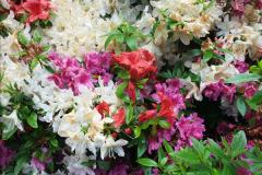 2015-05-22 Compton Acres Gardens, Poole, Dorset.  (48)