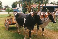 1996 Costa Rica (49)49