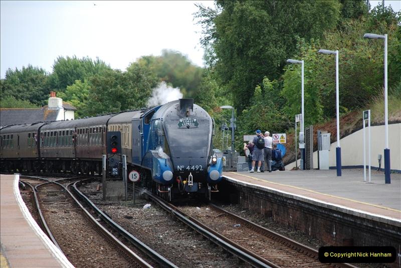 2011-08-02 DCE. Bittern @ Branksome, Poole, Dorset.  (1)019