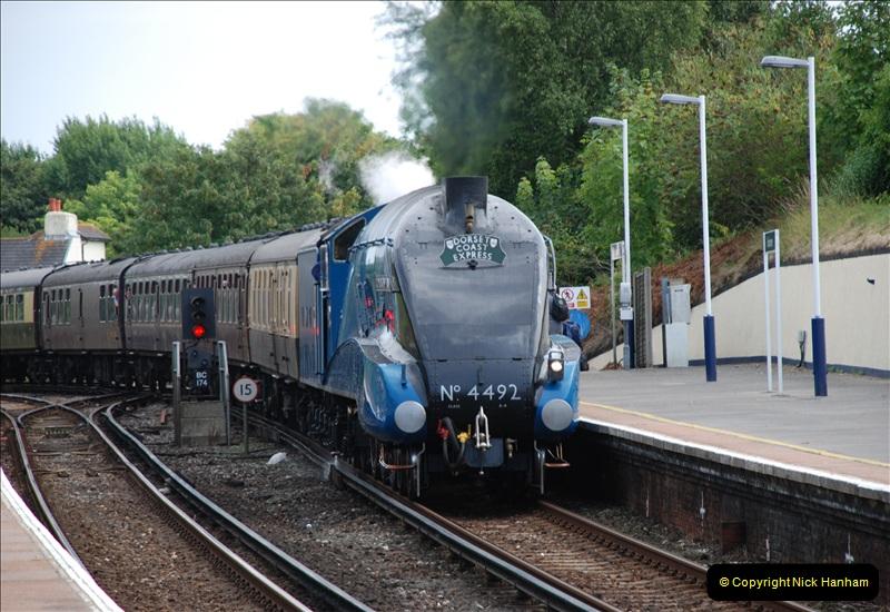 2011-08-02 DCE. Bittern @ Branksome, Poole, Dorset.  (3)021