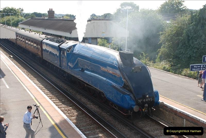 2011-08-09 Bittern @ Wareham, Dorset.  (14)039