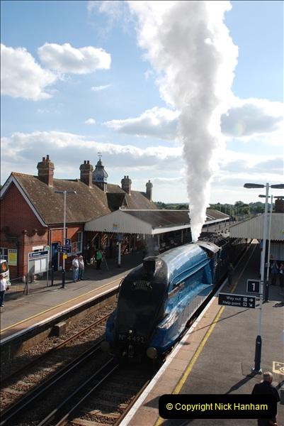 2011-08-09 Bittern @ Wareham, Dorset.  (18)043