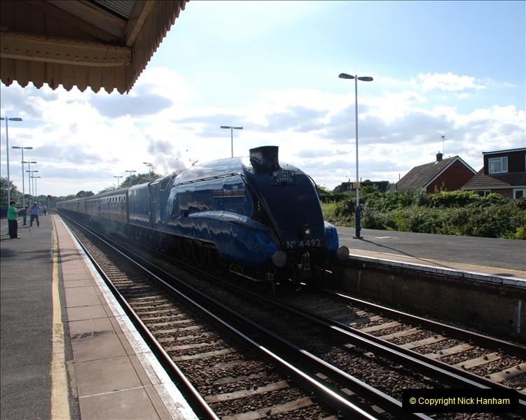 2011-08-09 Bittern @ Wareham, Dorset.  (4)029