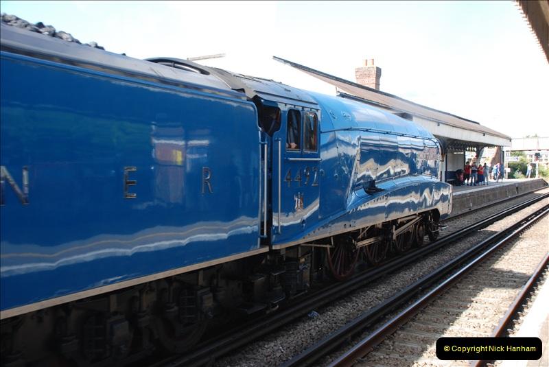 2011-08-09 Bittern @ Wareham, Dorset.  (9)034
