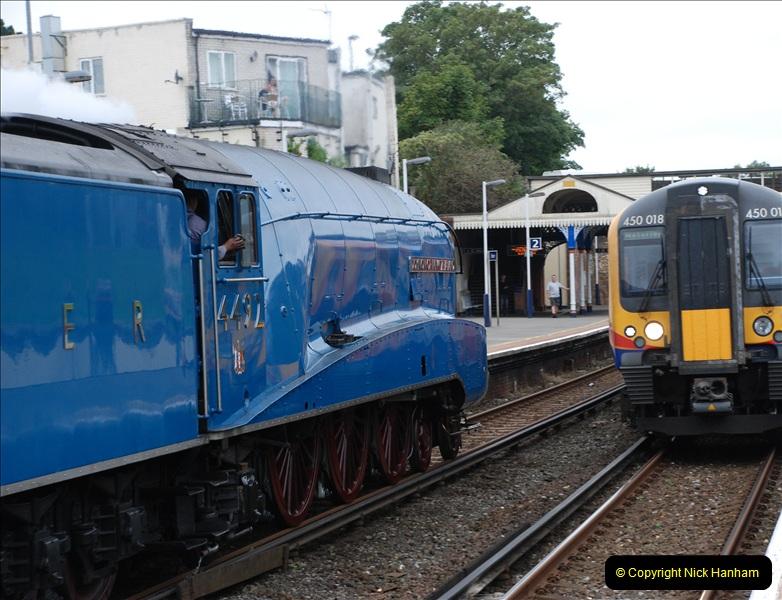 2011-08-16 Bittern @ Branksome, Poole, Dorset.  (8)072