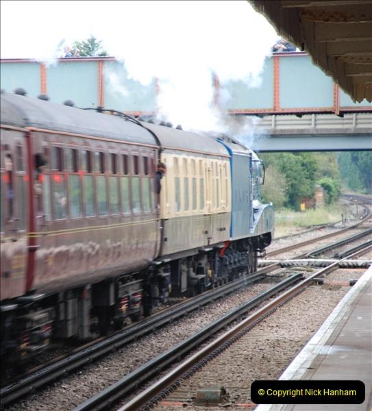 2011-08-23 Bittern @ Wareham, Dorset.  (10)085