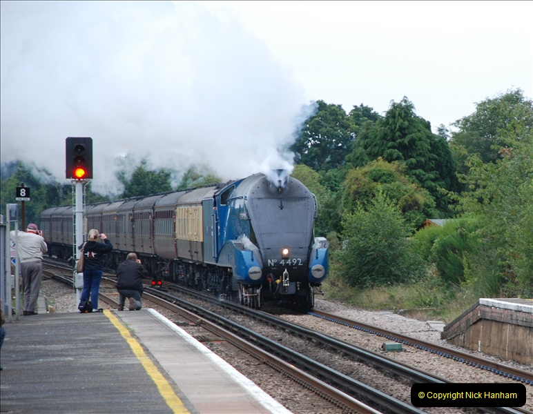 2011-08-23 Bittern @ Wareham, Dorset.  (1)076