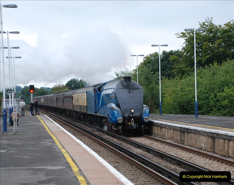 2011-08-23 Bittern @ Wareham, Dorset.  (4)079
