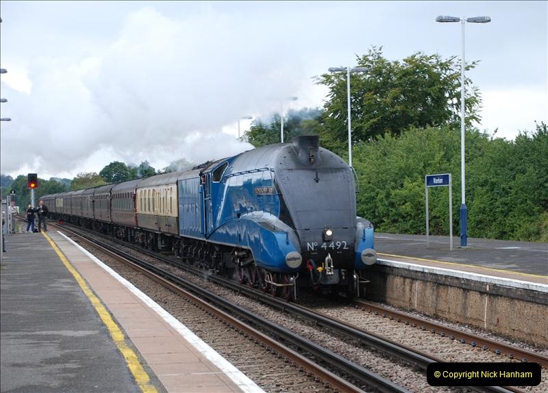 2011-08-23 Bittern @ Wareham, Dorset.  (5)080