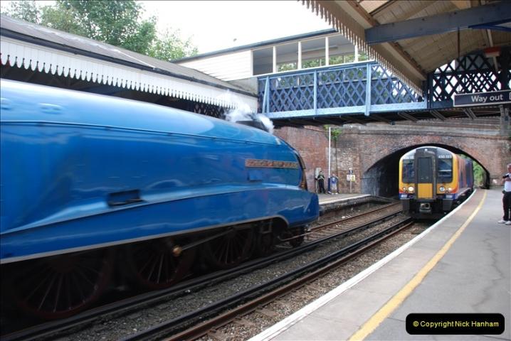 2011-08-02 DCE. Bittern @ Branksome, Poole, Dorset.  (6)024