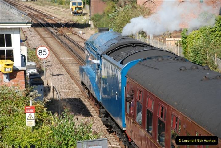 2011-08-09 Bittern @ Wareham, Dorset.  (22)047
