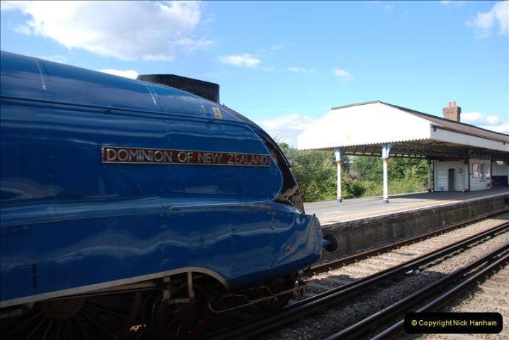 2011-08-09 Bittern @ Wareham, Dorset.  (6)031