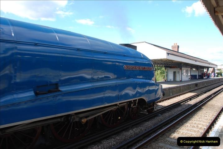 2011-08-09 Bittern @ Wareham, Dorset.  (7)032