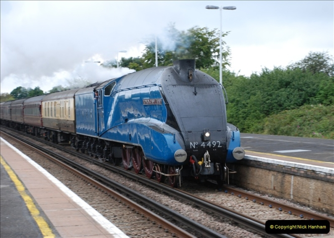 2011-08-23 Bittern @ Wareham, Dorset.  (6)081