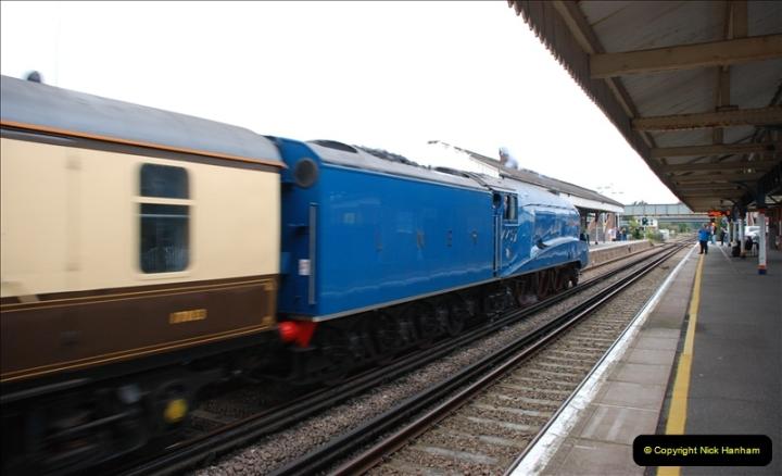 2011-08-23 Bittern @ Wareham, Dorset.  (7)082
