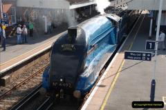 2011-08-09 Bittern @ Wareham, Dorset.  (16)041