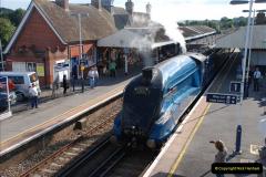 2011-08-09 Bittern @ Wareham, Dorset.  (19)044