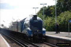 2011-08-09 Bittern @ Wareham, Dorset.  (2)027