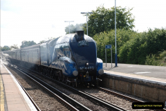 2011-08-09 Bittern @ Wareham, Dorset.  (3)028