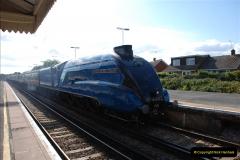 2011-08-09 Bittern @ Wareham, Dorset.  (5)030