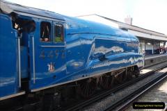 2011-08-09 Bittern @ Wareham, Dorset.  (8)033