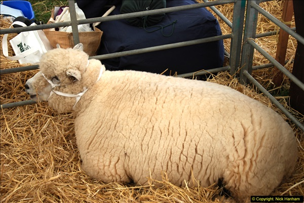 2014-09-06 Dorset County Show, Dorchester, Dorset (354)354
