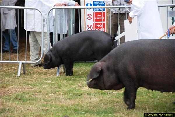 2014-09-06 Dorset County Show, Dorchester, Dorset (402)402