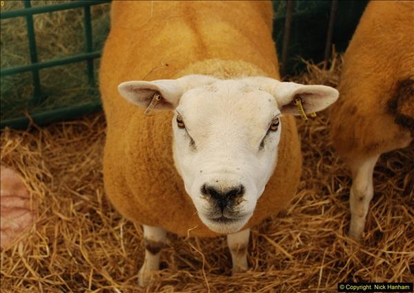 2015-09-06 The Dorset County Show 2015.  (255)255