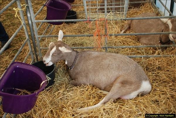 2015-09-06 The Dorset County Show 2015.  (302)302