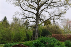 2017-04-20 Rosemoor (RHS) Great Torrington, Devon.  (102)157