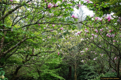 2017-04-20 Rosemoor (RHS) Great Torrington, Devon.  (124)179