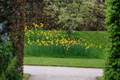 2017-04-20 Rosemoor (RHS) Great Torrington, Devon.  (173)228