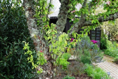 2017-04-20 Rosemoor (RHS) Great Torrington, Devon.  (181)236