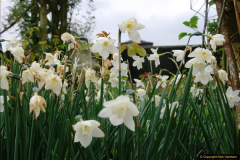 2017-04-20 Rosemoor (RHS) Great Torrington, Devon.  (20)075