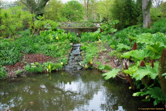 2017-04-20 Rosemoor (RHS) Great Torrington, Devon.  (218)273