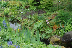2017-04-20 Rosemoor (RHS) Great Torrington, Devon.  (230)285