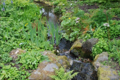 2017-04-20 Rosemoor (RHS) Great Torrington, Devon.  (231)286