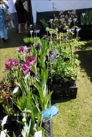 2014-05-03 Downton Cuckoo Fair, Downton, Wiltshire.  (25)025