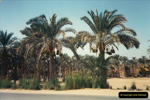 1994-08-02 to 16 Egypt. Cairo area. (85)085