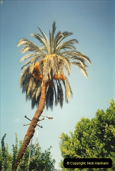 1994-08-02 to 16 Egypt. Cairo area. (86)086