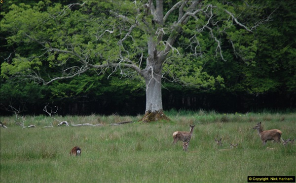 2015-05-30 Killarney and The Ring of Kerry.  (25)025