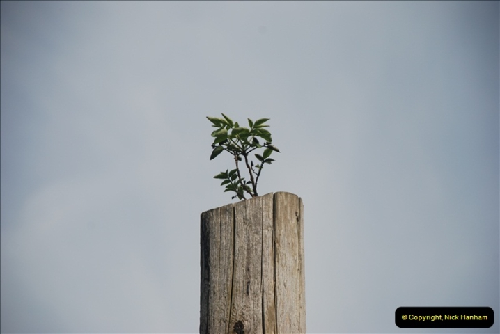 2012-09-06 ESR Cranmore, Somerset.  (53)467