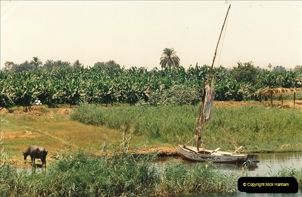 1994-08-08 to 15-08. Luxor & The Nile, Egypt.  (13)240
